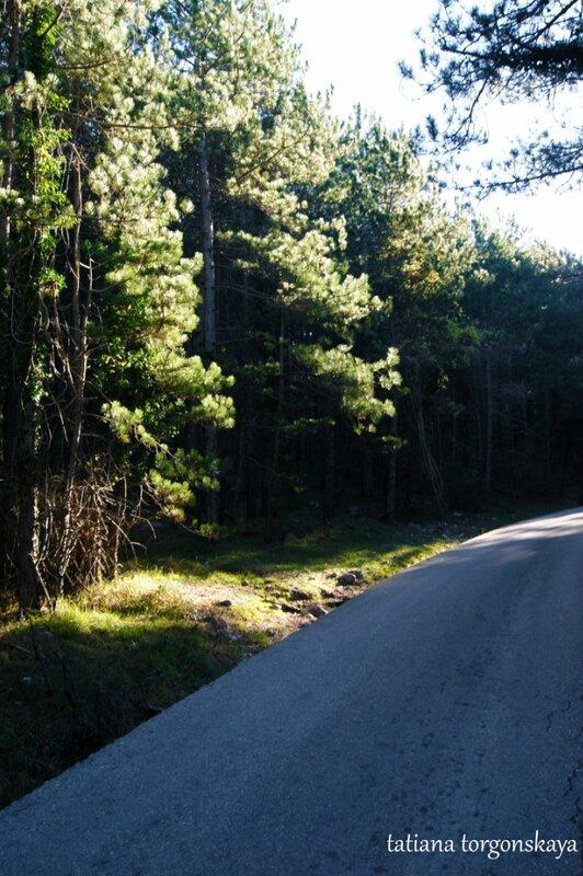 Путь через хвойный лес
