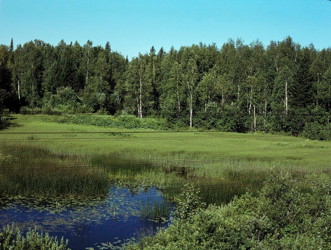 Мариинск. Болота и лес