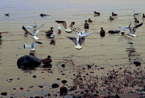 Птичье содружество