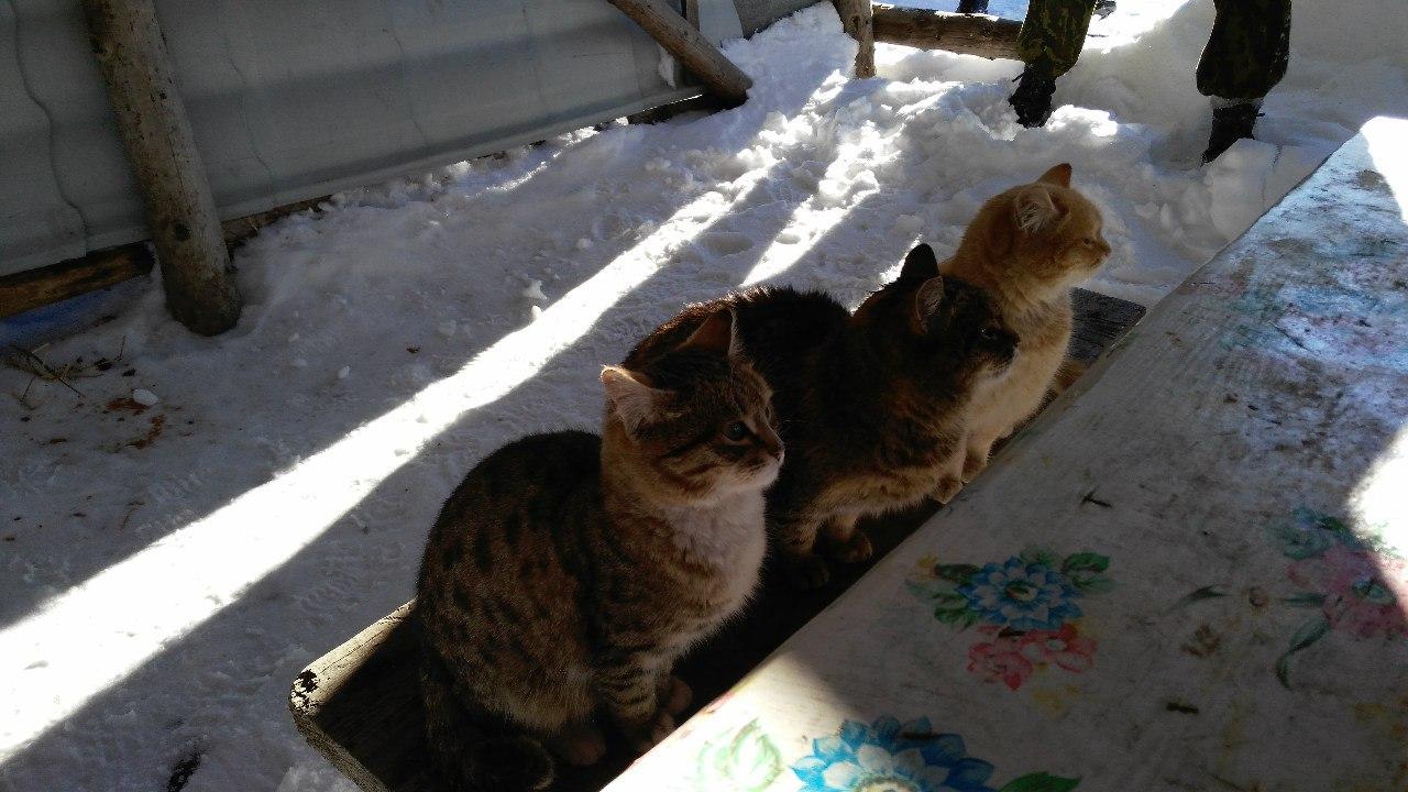 Таганайские коты