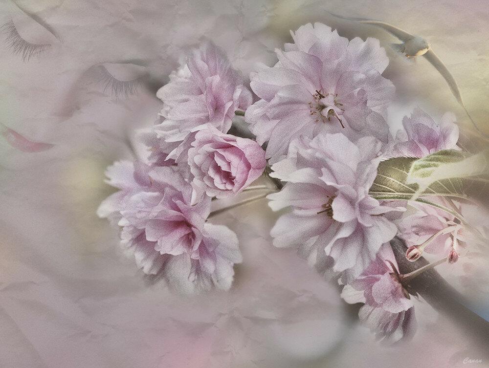 sweet-dreams--984b-9c2c0d5aca0f.jpg