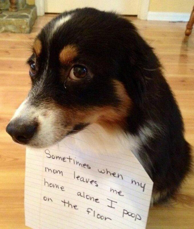 Блог собачьего позора. Фотографии наказанных животных с позорными надписями