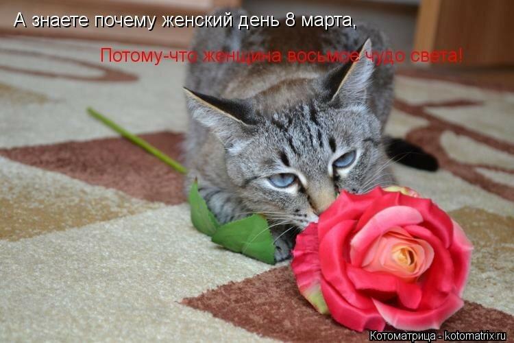 Загадочная женщина, картинки с 8 марта с котятами