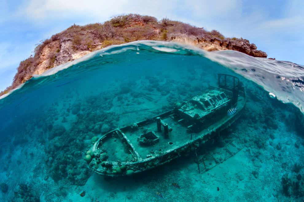 8. Второе место в категории «Макро». Осьминог на Гавайях. (Фото Helen Brierley | Underwater Pho