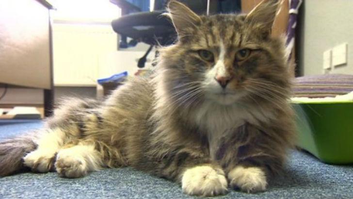 Толстый и довольный кот, пропавший более года назад, нашелся на фабрике зоокорма