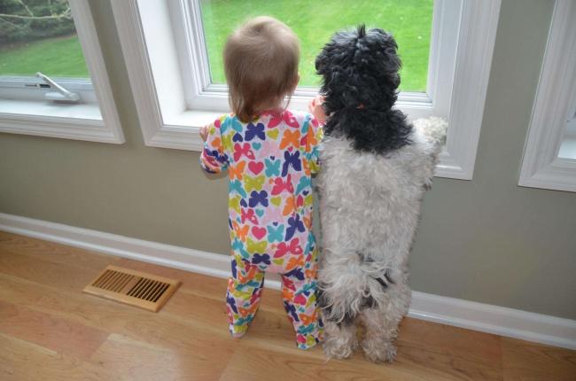 Домашнее животное — гармония в семье. С котом дом становится уютнее, комфортнее и мягче. С собакой —