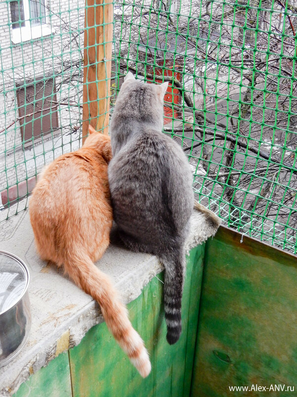 Пригляделся я, а там за сеткой, на воле, по ветке воробей прыгает и на кошек любуется.