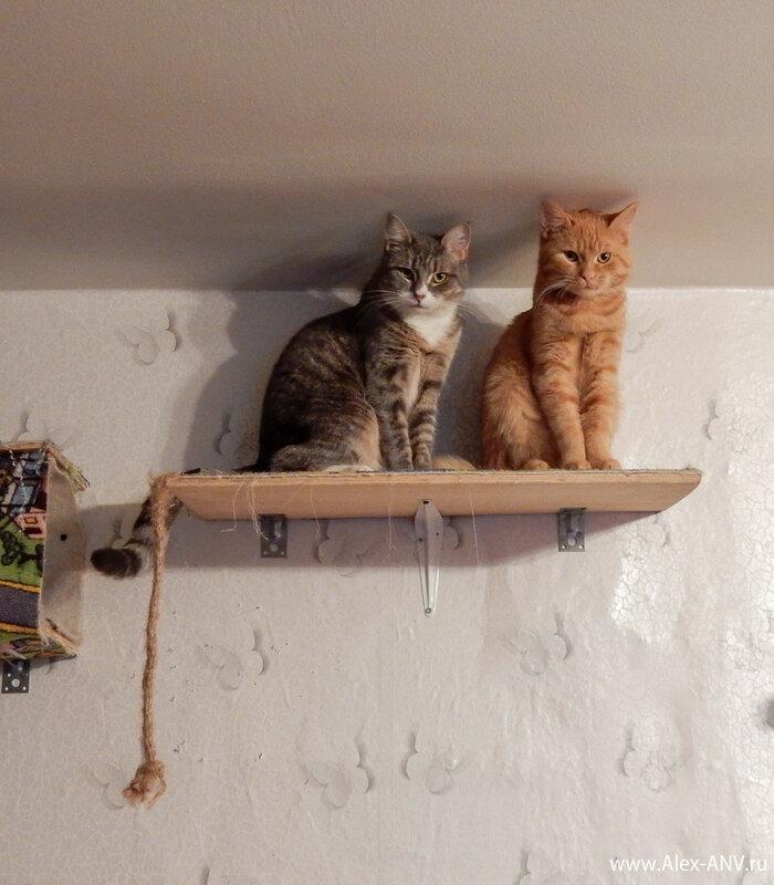 Ты домой приходишь, а они на тебя глядят внимательно-внимательно.