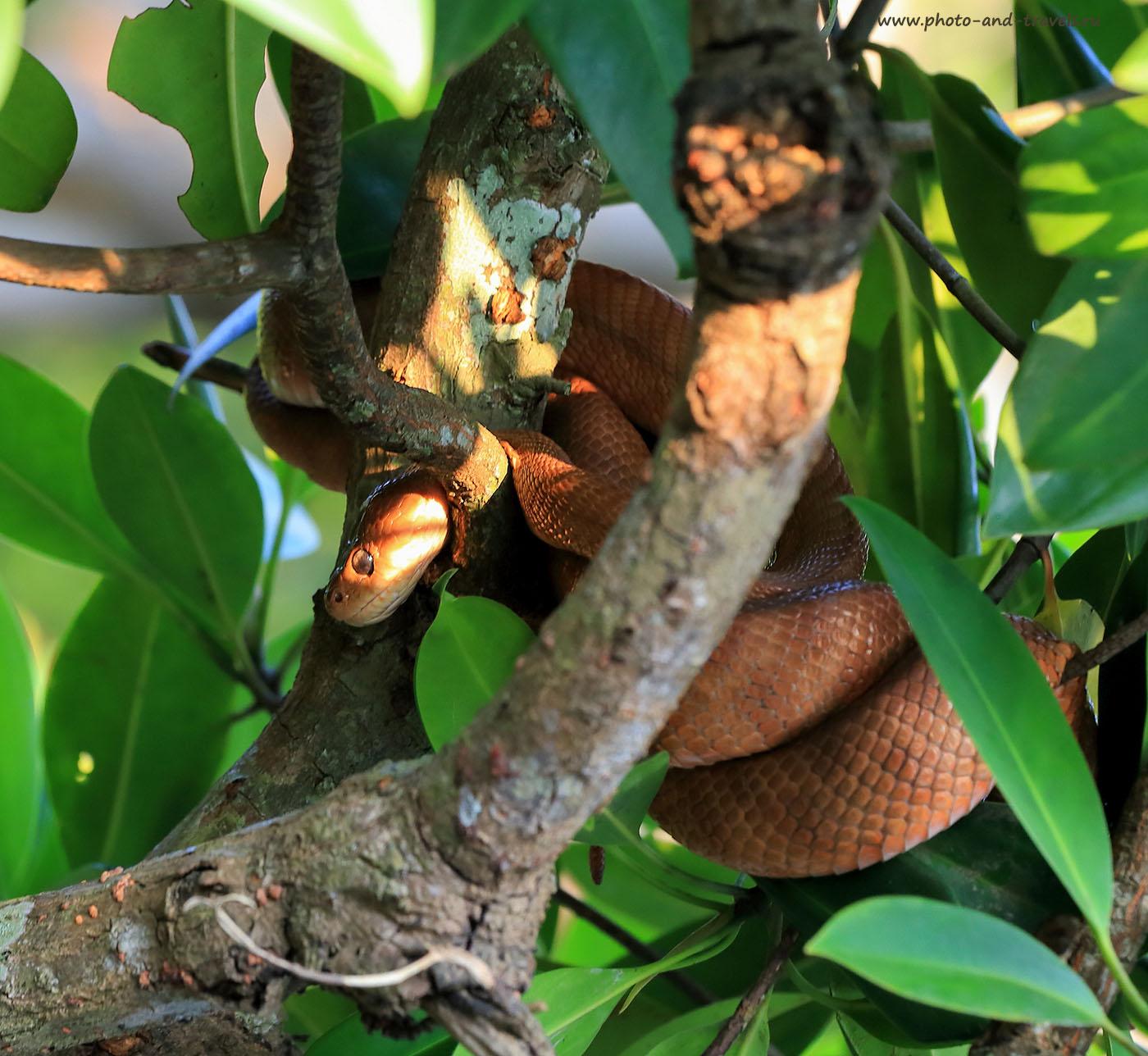 Фото 15. Змея в джунглях на Старом Гоа. Отзывы туристов о безопасности во время путешествия в Индию (70-200, 1/60, -1eV, f7.1, 191mm, ISO 400)
