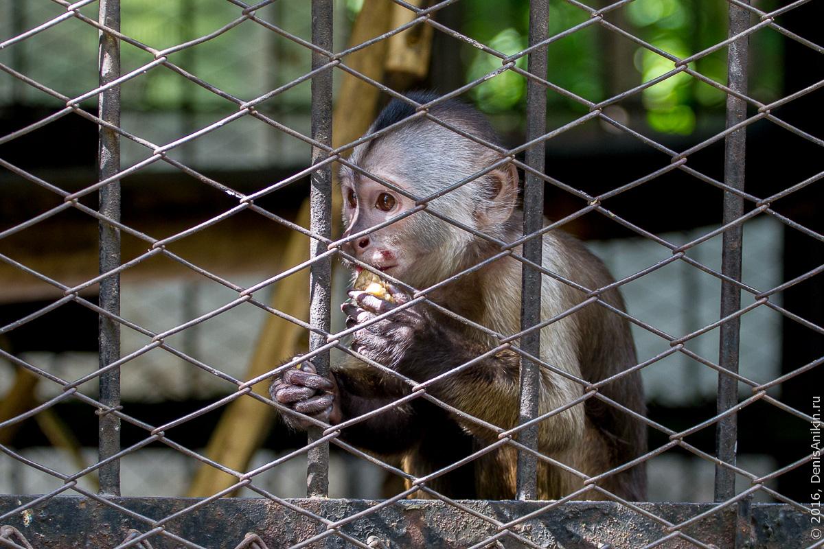 Пензенский зоопарк. Животные 16