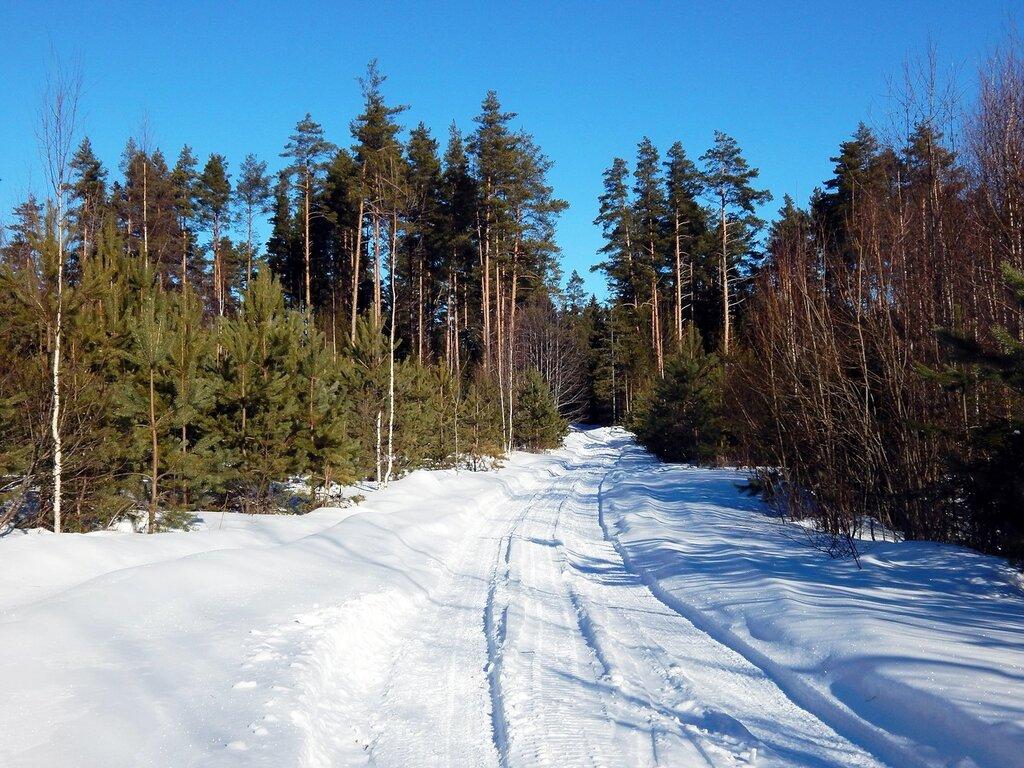Дорога снежная