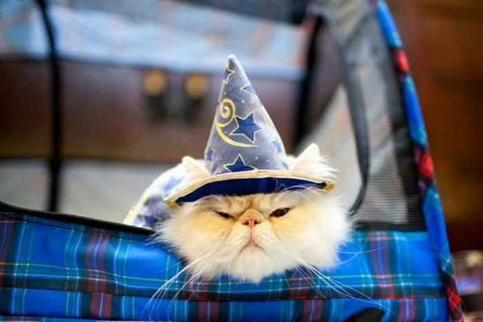 Кошачий показ мод на Манхэттене | Фотографии
