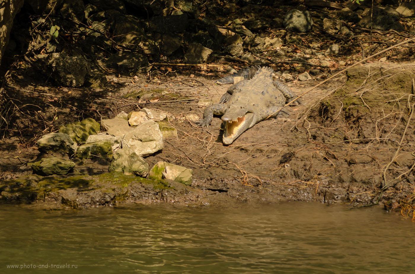 Фото 9. На берегах реки Грихальва (Grijalva), что протекает по дну каньона Sumidero. Поездка по Мексике самостоятельно. Отчеты туристов