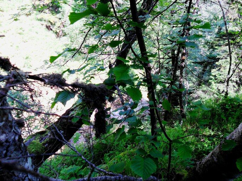 На склонах горных, в походе ... SAM_0521.JPG