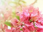 цветы (8).jpg