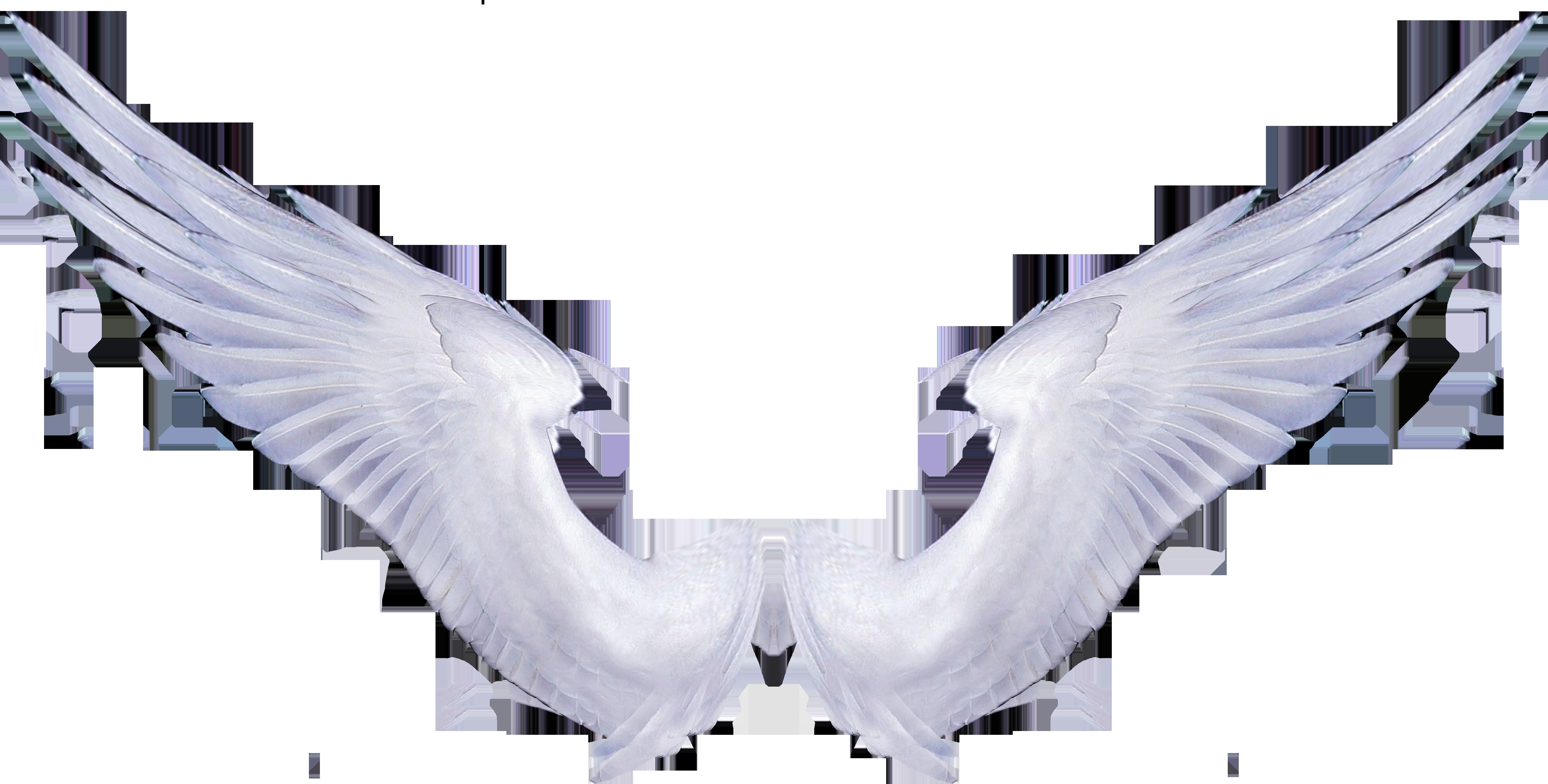 Летием школе, картинки крылья ангела анимация