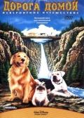 Фильмы про кошек - Черный кот (1981)