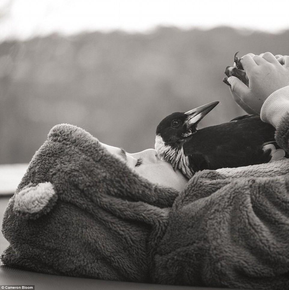 2. Пингвин очень умная и заботливая сорока, которая любит поваляться с хозяевами в постели и даже по