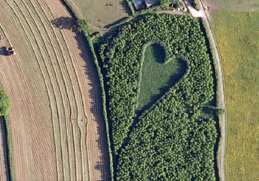 Дубовый лес, высаженный в память о жене