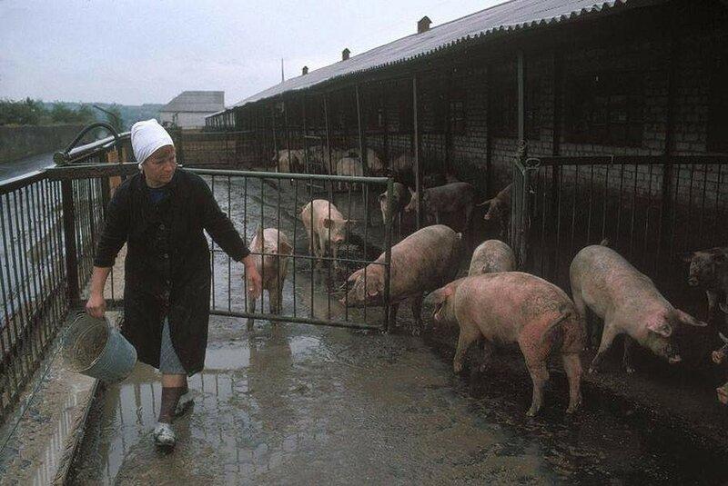 Донецк. Колхозная ферма шахтеров, которая обеспечивает их едой. 1988 год.