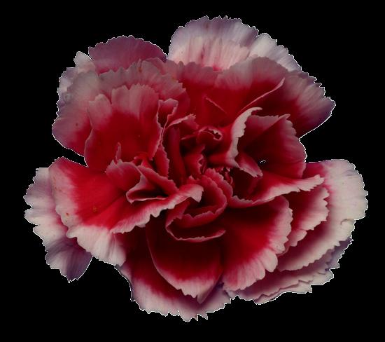 Красивые цвети