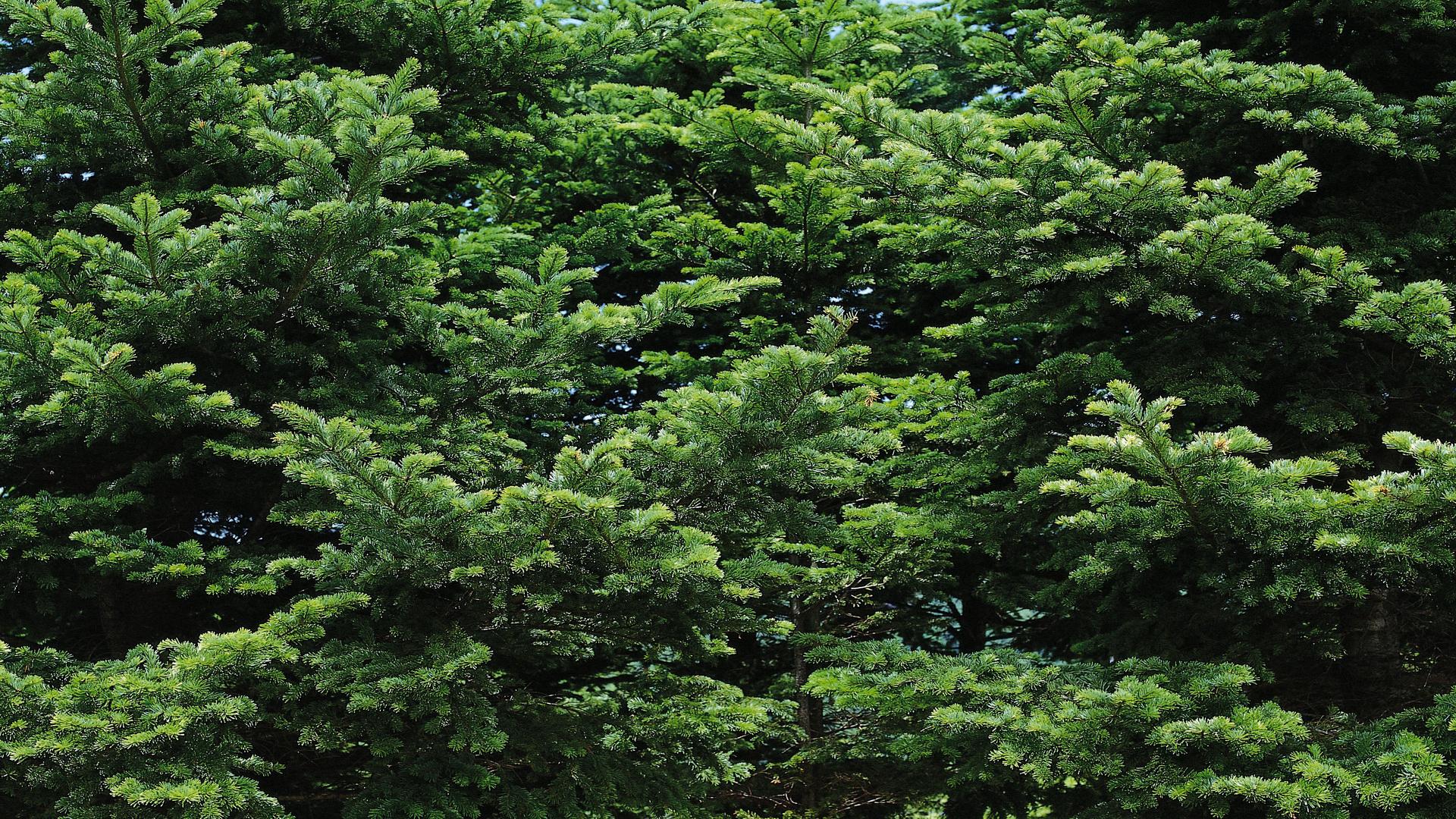 Фото природы. Многоликая природа в HD качестве. альбоме, Фотографии, «Многоликая, природа, ЯндексФоткахltmore, dodjik007, HDкачестве, природы, Серия, здравствуйте, продолжается, скромная, обоев, подборка, привет