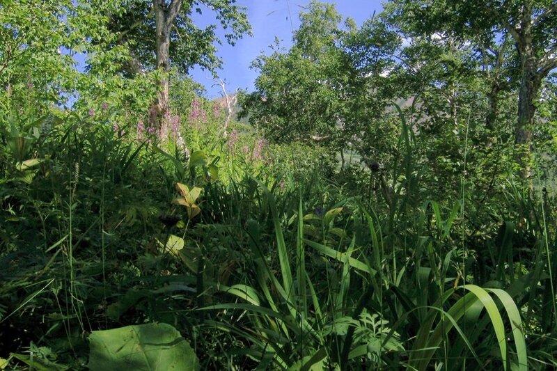 В траве, Камчатка,