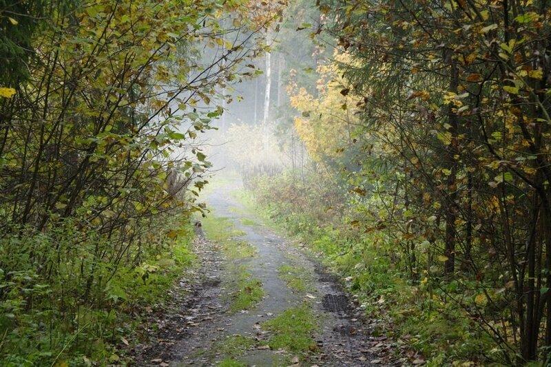 Октябрь в Подмосковье. Дорога в туманом лесу
