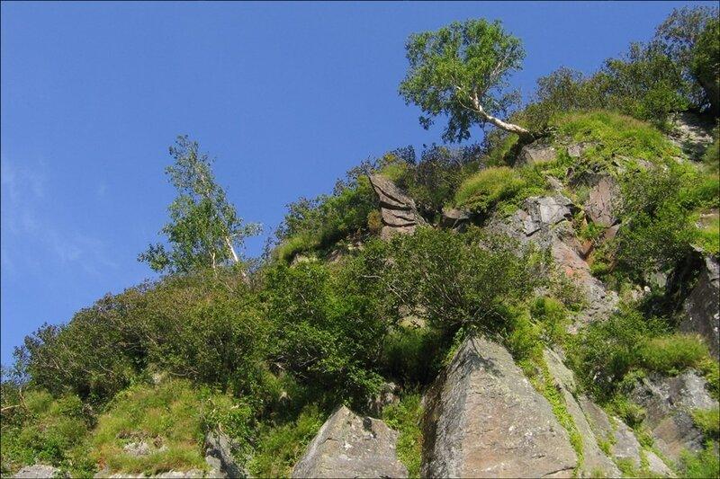 Деревья на скалах, Камчатка