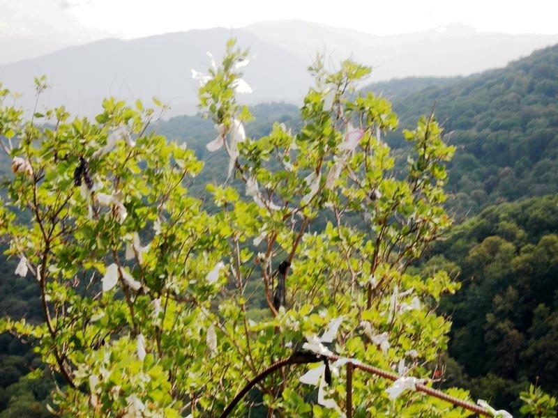 Фотография : Кавказ, куст удачи №2.
