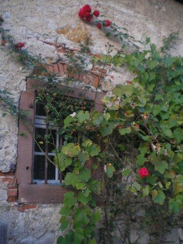 Окно в розах