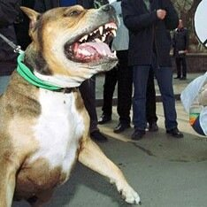 Составлен список опасных пород собак
