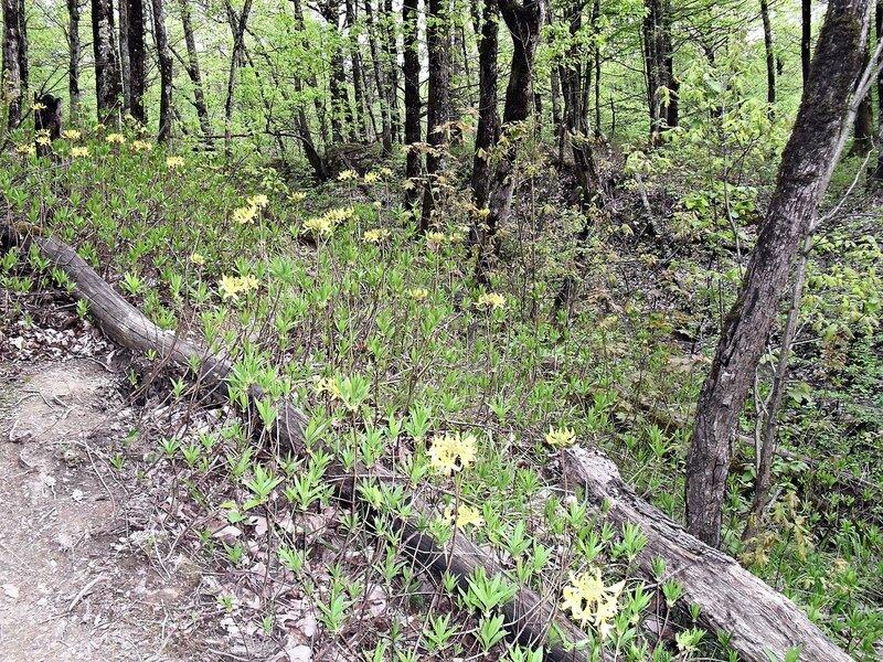В лесу ... SDC15814