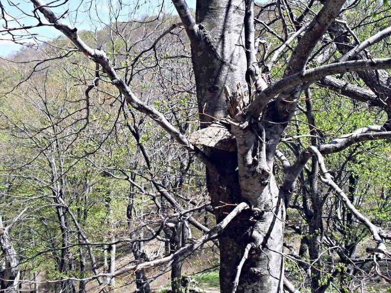 Камень в дереве