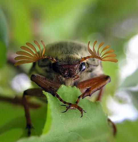 макро.насекомые