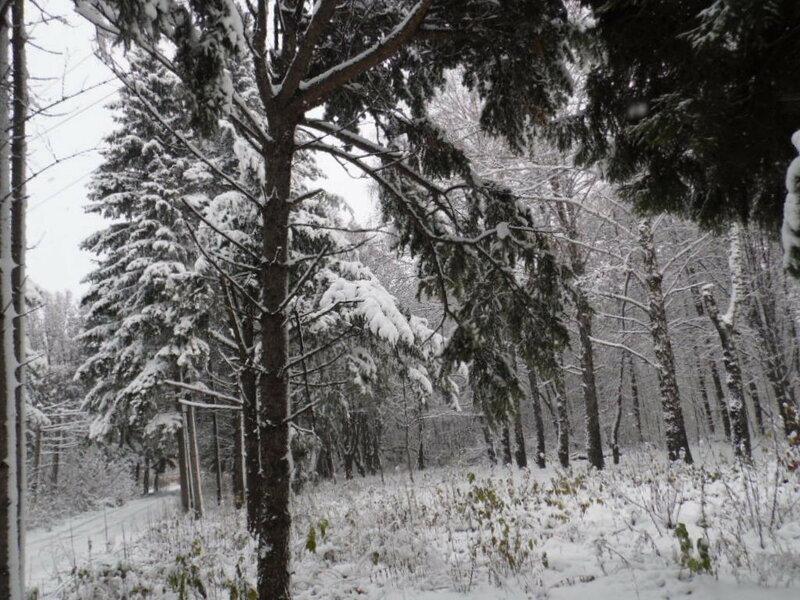 Зимняя осень или осенняя зима- 2015