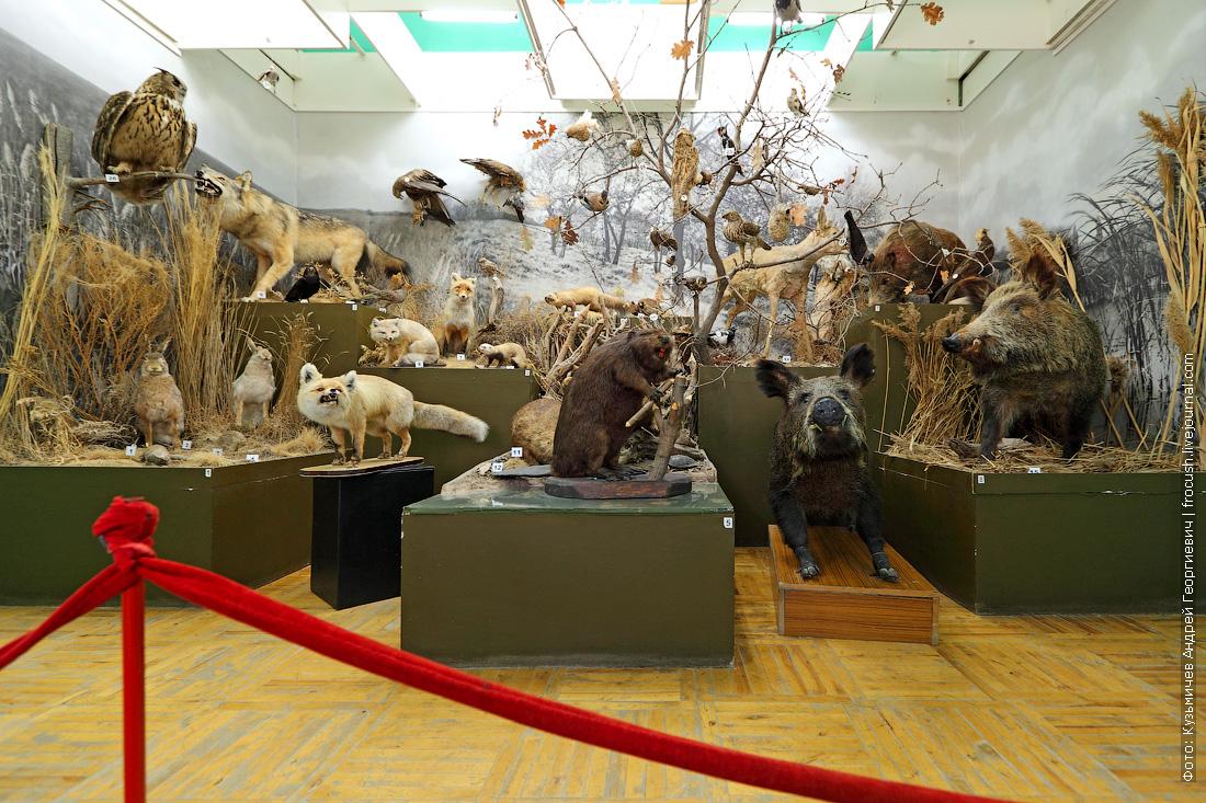 Камышинский историко-краеведческий музей Животный мир нашего края