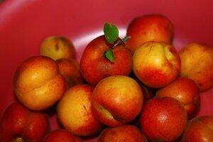 такие у нас абрикосы