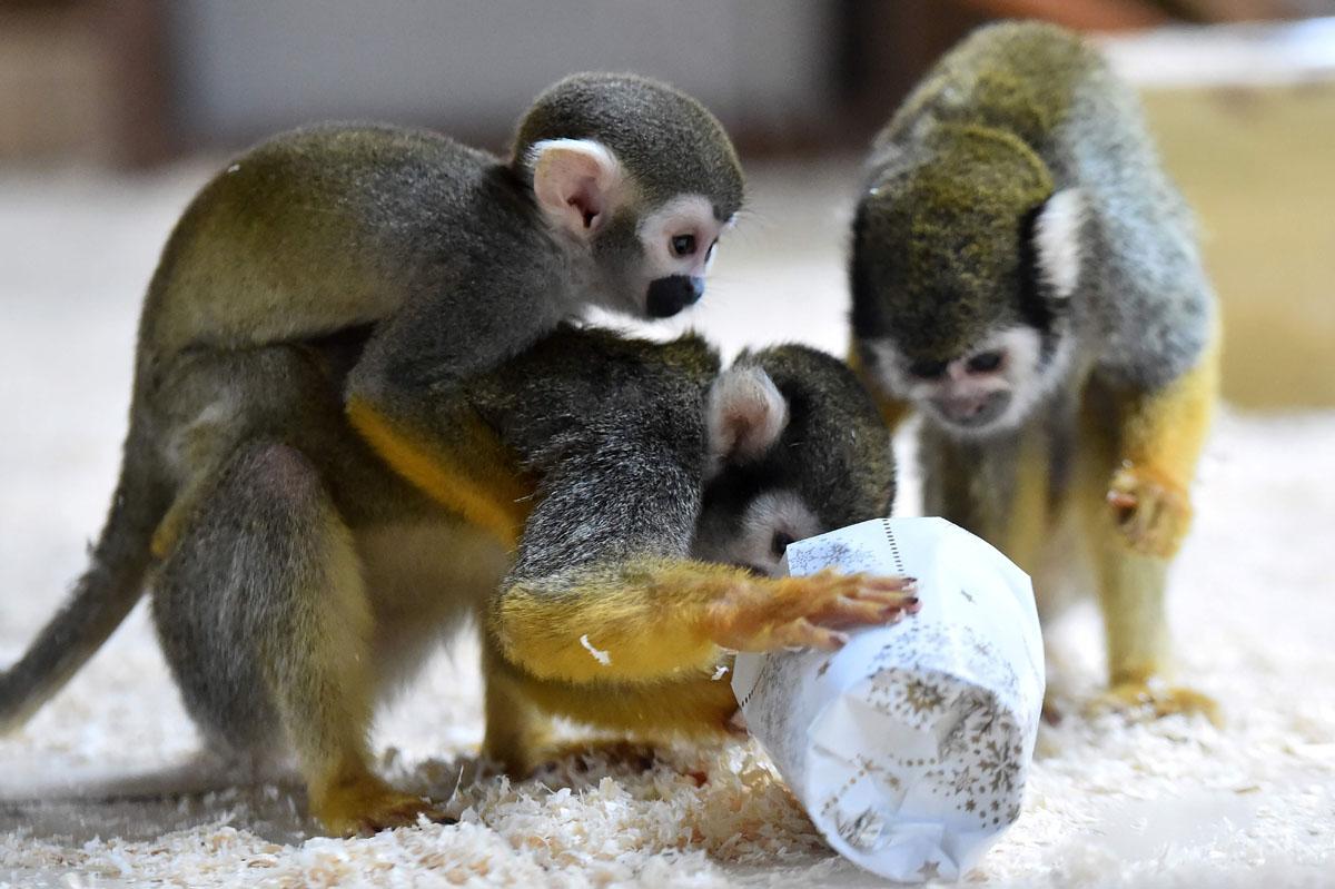 Беличьим обезьянкам из Парижа вручили овощное рагу.
