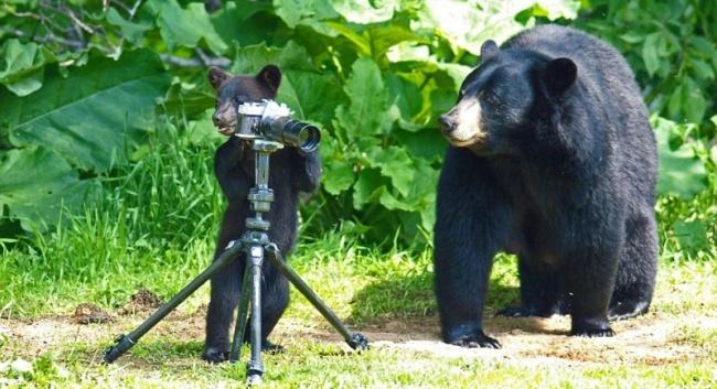 Иногда даже медведи скосыми лапами делают фото лучше, чем некоторые фотографы скривыми руками.