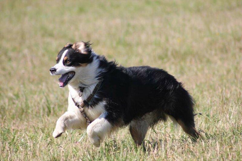 Вес собаки и анатомия для работы/спорта - Страница 5 0_1cf817_5b43ef6a_XL