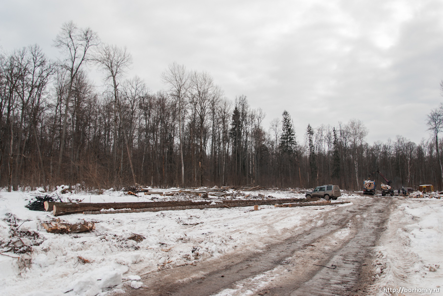 вырубка леса на моховой