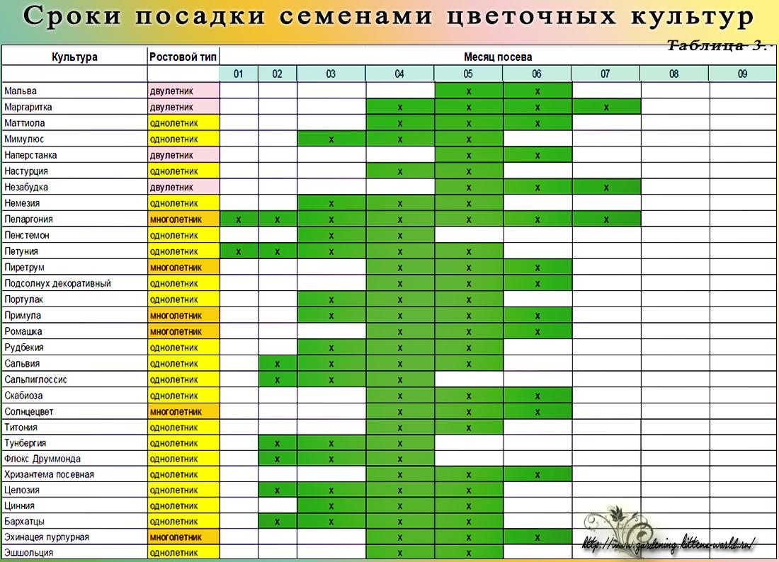 Сроки посадки семенами цветочных культур - таблица