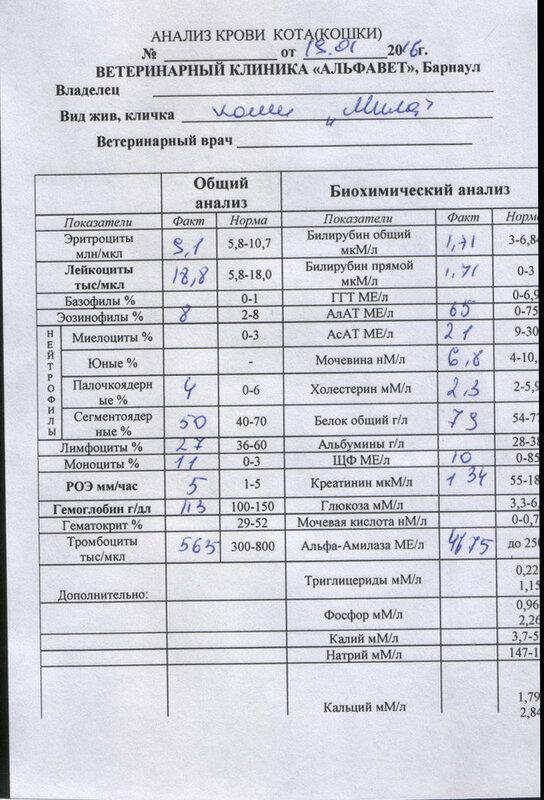 Цена ветеринара крови анализ у в анализе крови принудительно