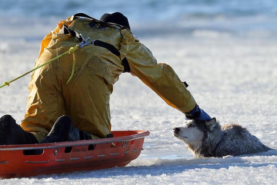 Пожарный спас хаски, которая провалилась под лед в бостонской бухте Бостонский пожарный Шон Коул отв