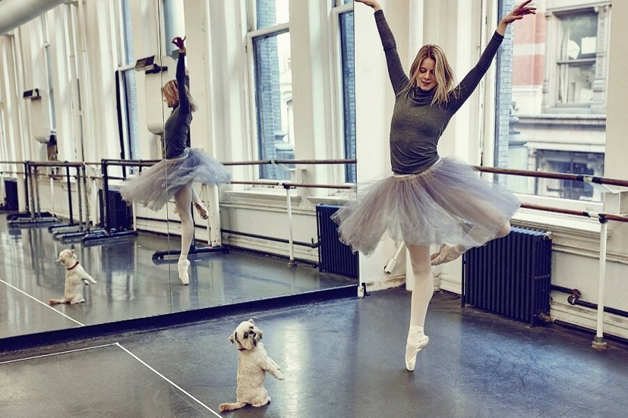 Балет и собаки