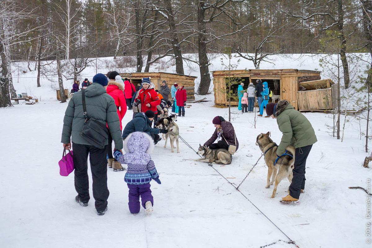 Питомник сибирских хаски DogWinter 4