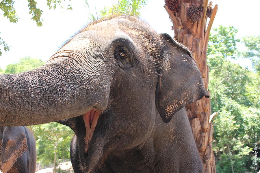 Слоненок в зоопарке Кхао-Кхео