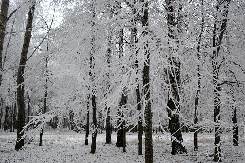 мороз 4