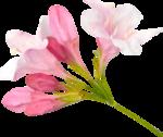 NLD Addon Flower (6).png
